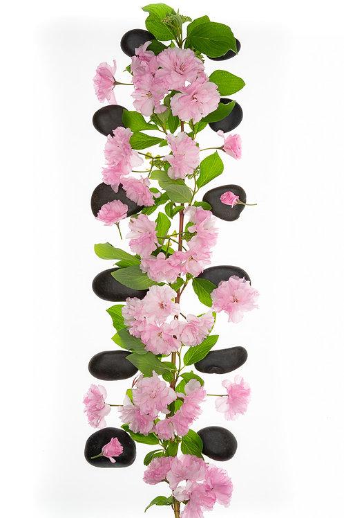 Cherry Blossom Spine