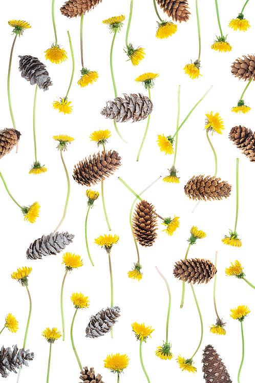 Pinecones & Dandelions