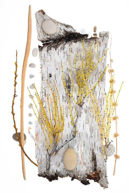 Birch Bark 1