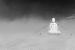 Bodhi by Virginia Connor
