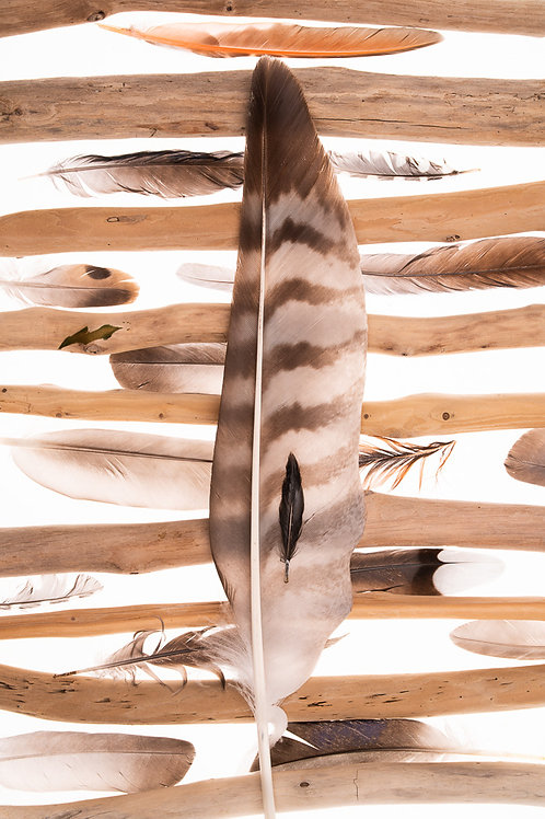 Driftwood & Feathers