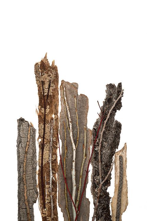 Bark Twig Texture