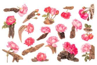 Driftwood & Roses