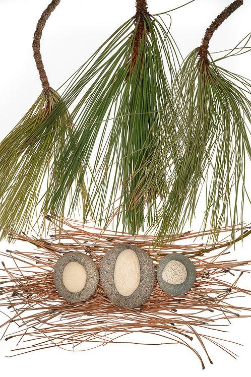 Pine Nest