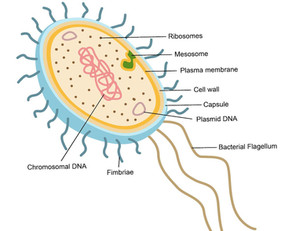 Bacterial Cell Composition