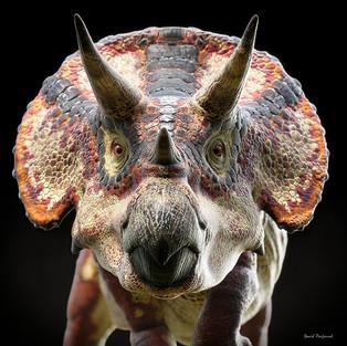 Triceratops Selfie