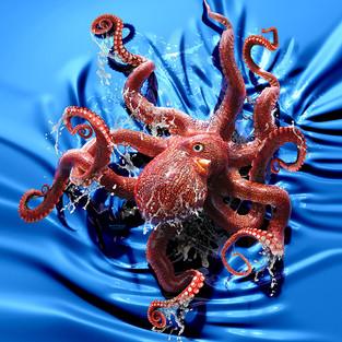 Octopus Climb