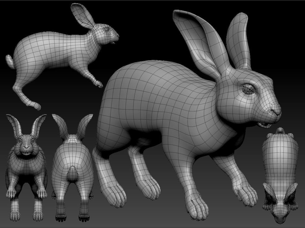 Rabbit basemesh