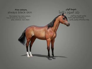 horse col_1.3.1.jpg