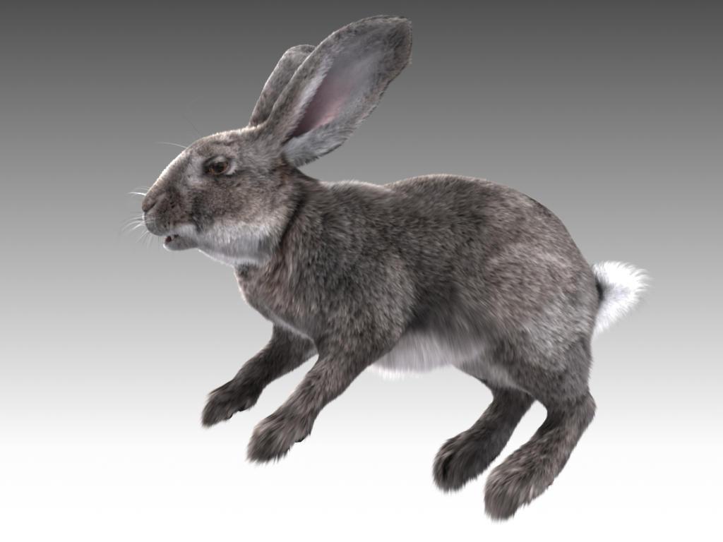 Rabbit amends
