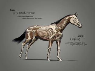 horse skel_1.2.1.jpg