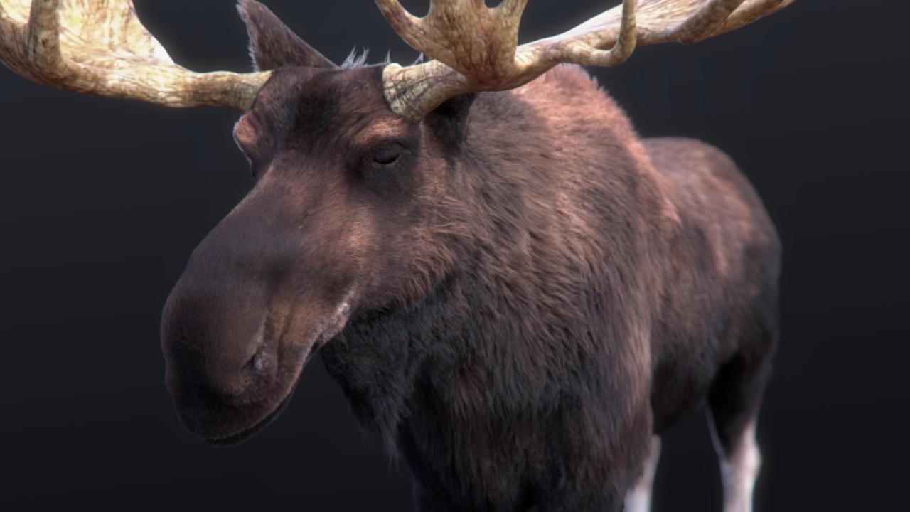 Moose Fur wip