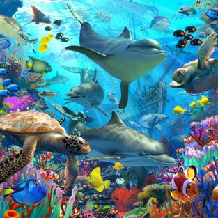 Dolphin Playground