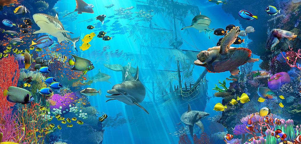 Dolphin playground_headerback.jpg
