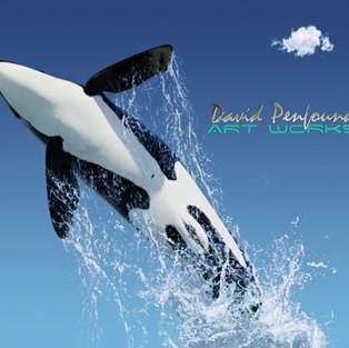 Orca Leap