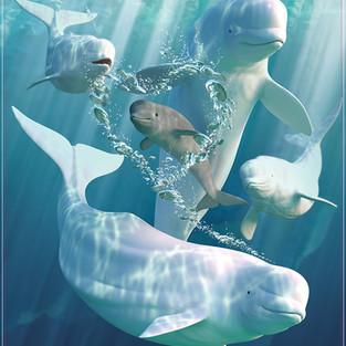 Belluga Whales Bubbles
