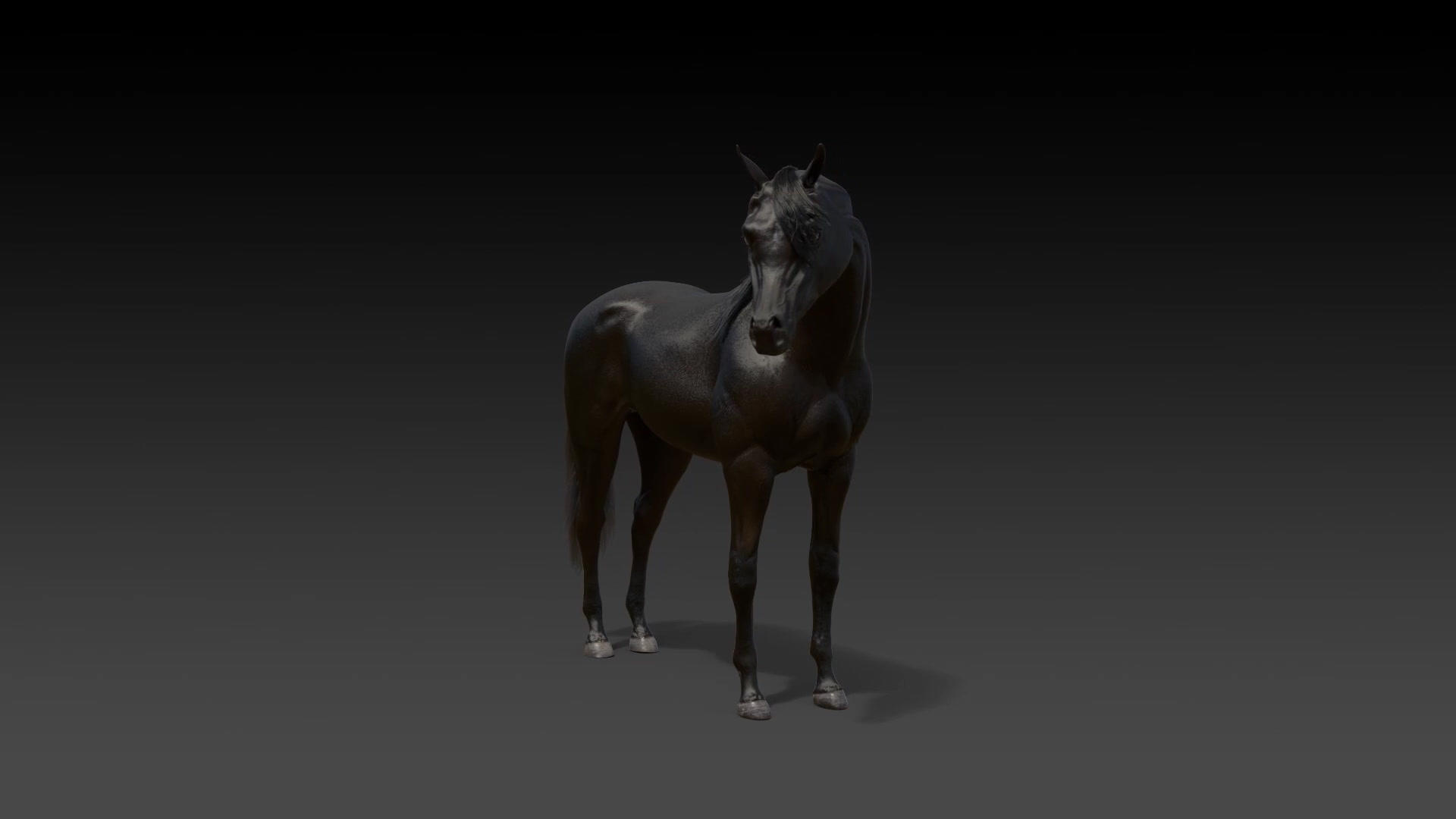 Arabian Horse Excerpts