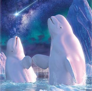 Beluga Whales Joy