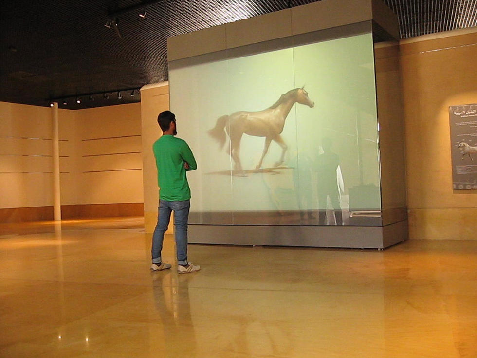 Arabian Horse Exibit Early Testing