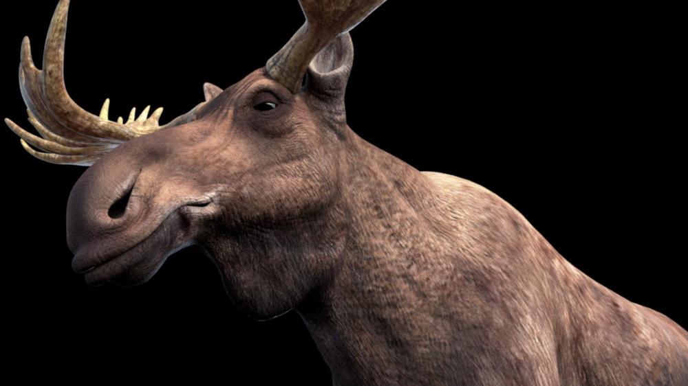 Moose Base Wip
