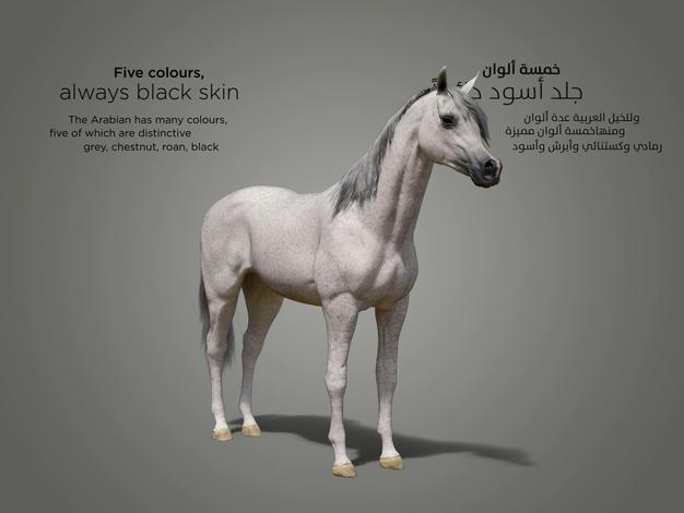horse col_2_1.4.2.jpg