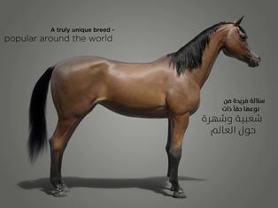 horse_1.4.2.jpg