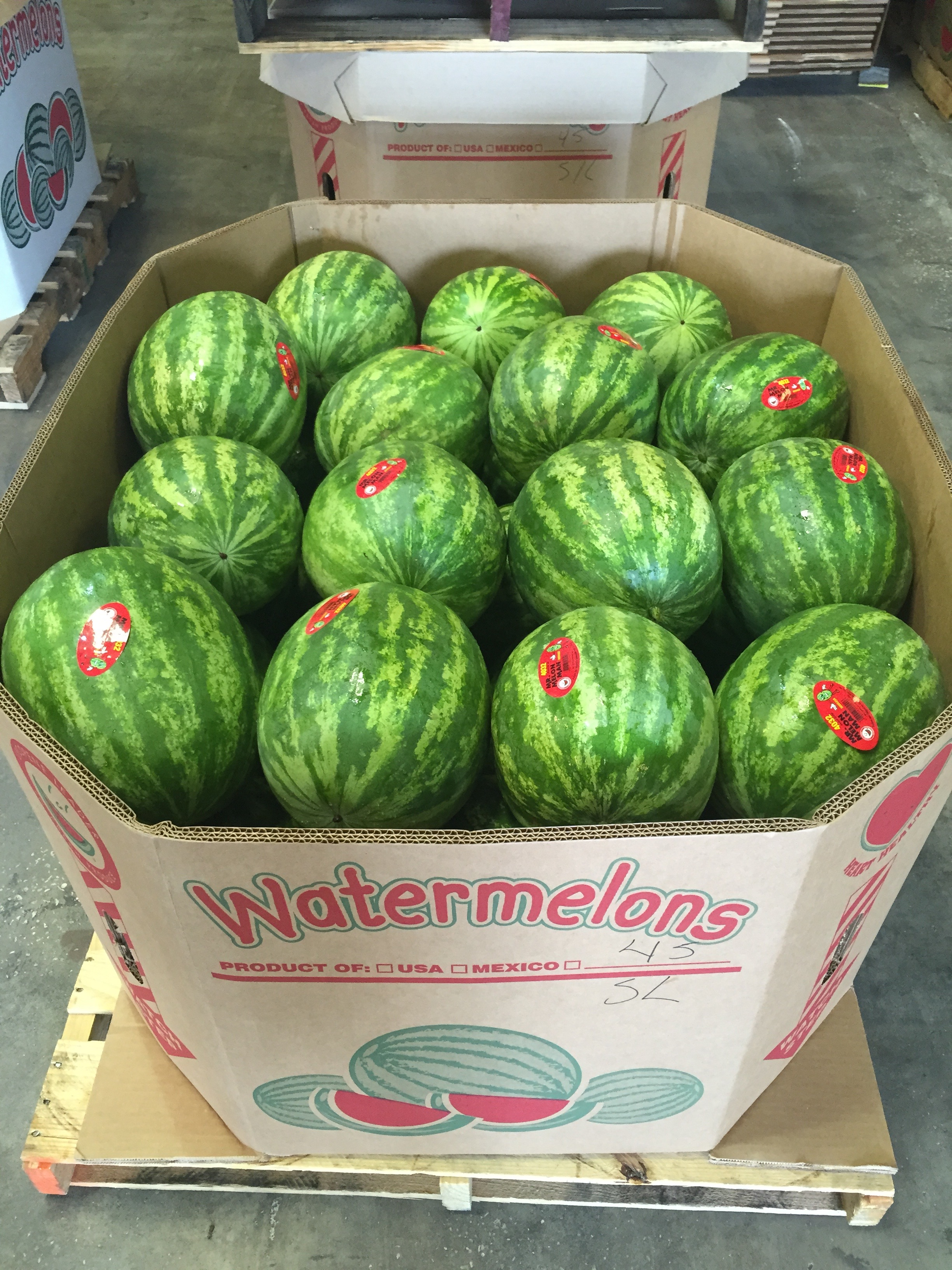 Seedless Watermelons ready for retai