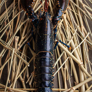 Gallery-Blue-Lobster.jpg