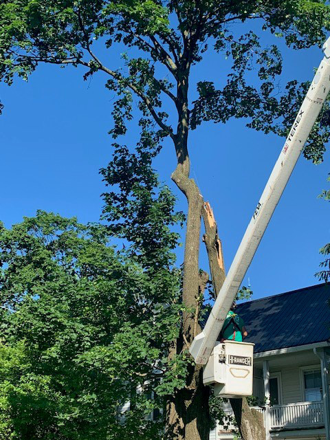 Crane Tree Care 20.jpg
