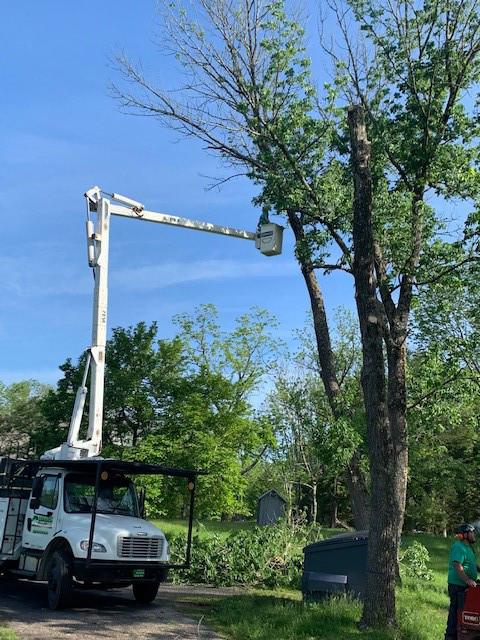 Crane tree Care 18.jpg