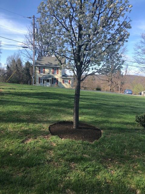 Tree Mulch 9.jpg