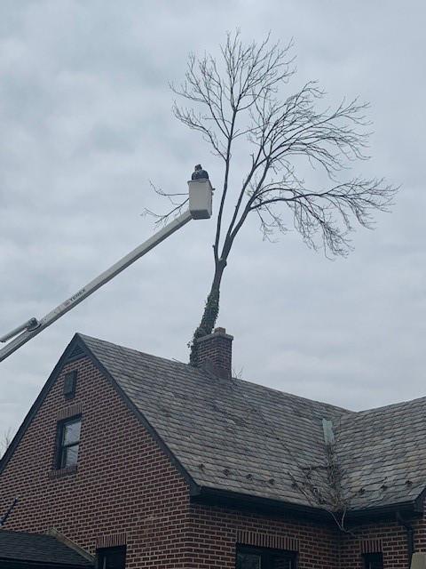Tree Care Crane 18.jpg