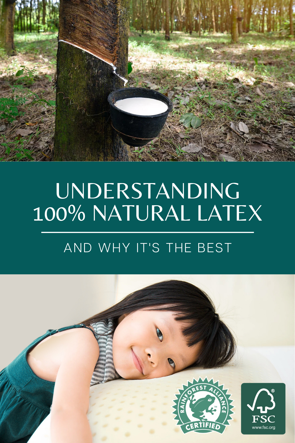 Natural latex being tapped from a rubber tree  and little girl laying on natural latex