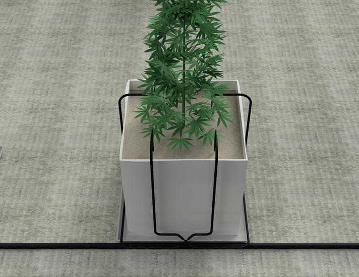 Cannabis_2018-May-27_12-09-59PM-000_Cust