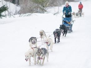 Need a refreshing vacation? Consider Dog Sledding in Pagosa Country.