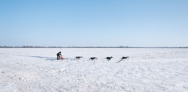 Things to do in Pagosa Springs in Winter - Dog Sledding
