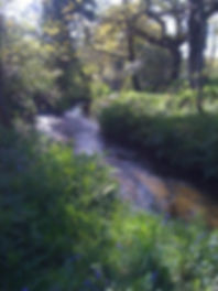 photo of river with bluebells.jpg