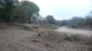 View upriver.jpg