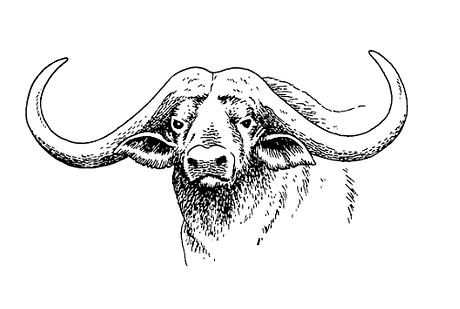 buffalo with faded effect 1.png