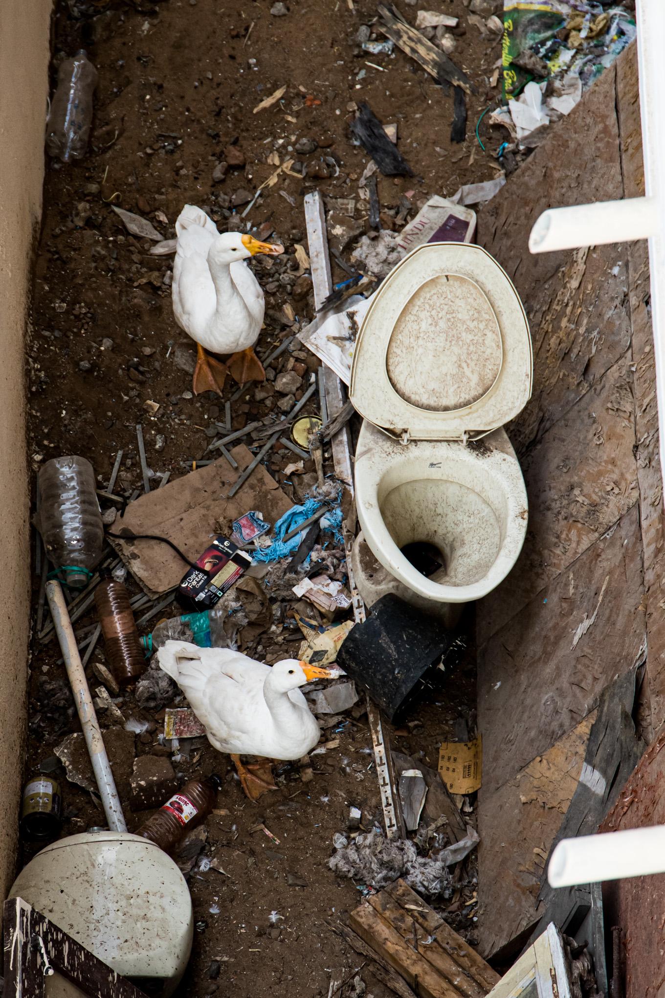 Trash Swans