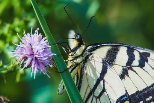 Butterfly Breakfast
