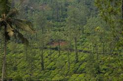 Tea Hills, from a distance