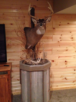 2015 Shed Antlers