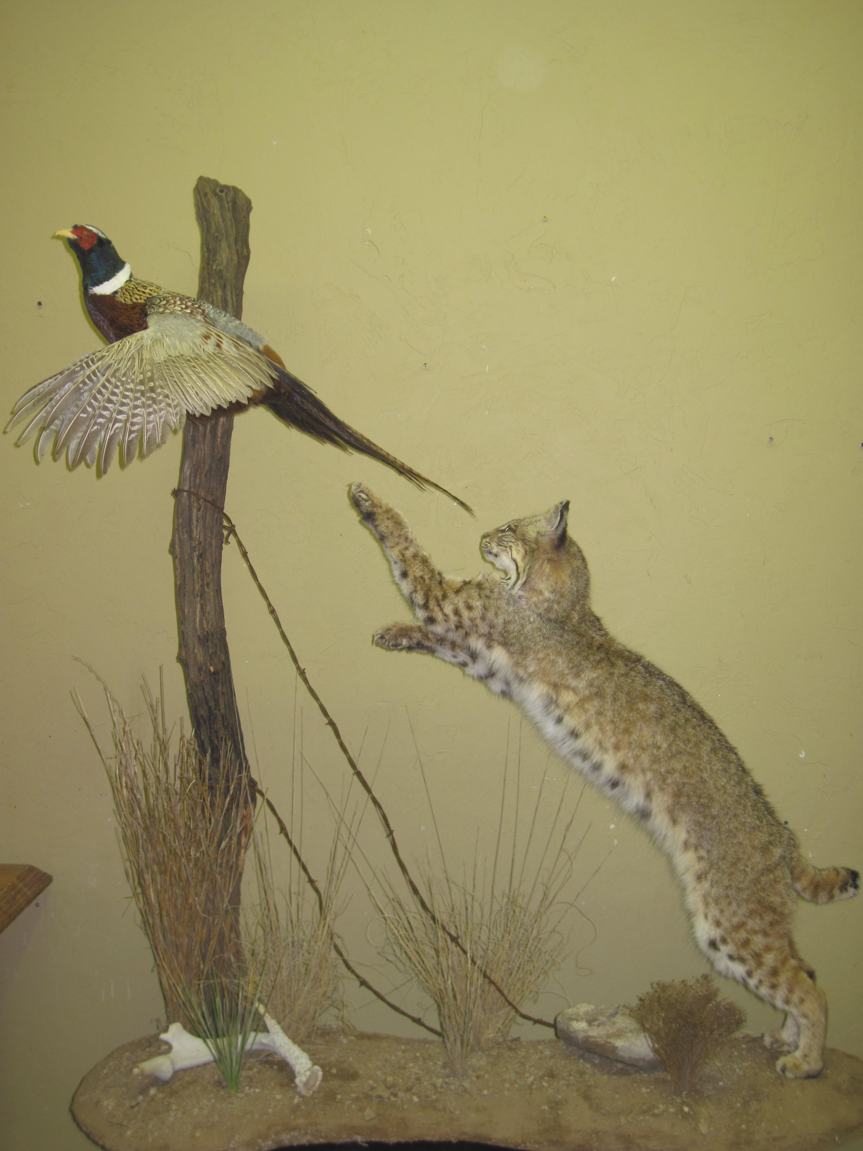 Bobcat Pheasant on Custom base.