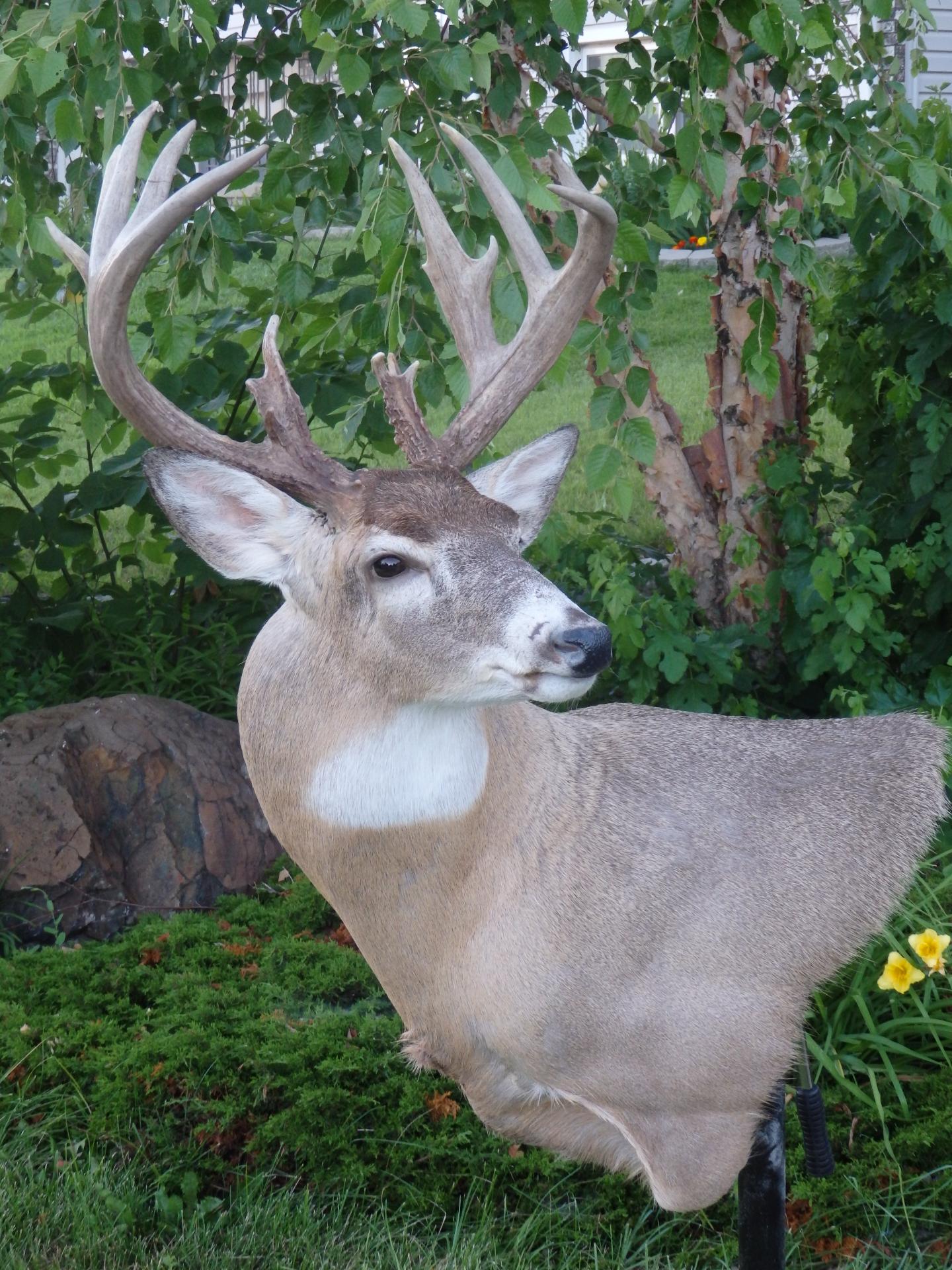 Kansas Whitetail
