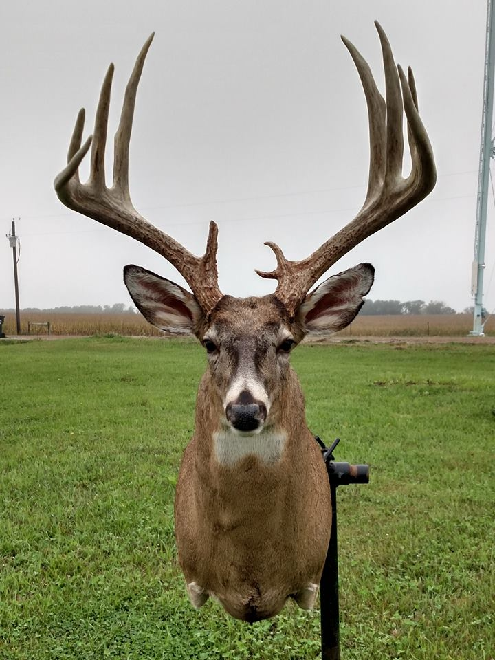 mike bell giant 10 pt