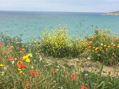 Walk Newquay Headlands - South West Coastal Path