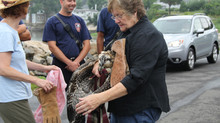 Wildlife Rescue Guilford Firefighters Answer The Call