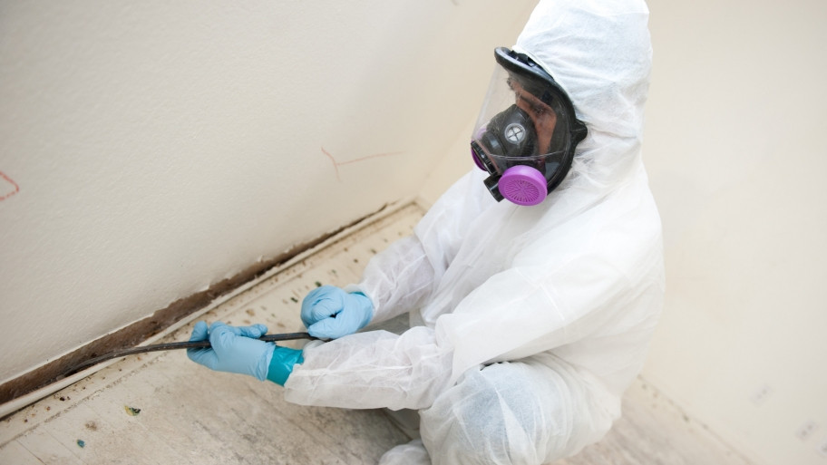 Mold Removal | Calgary, AB | We Buy Houses fast, Any Condition