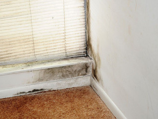 What Causes Mold in Houses and Homes | Calgary, AB | We Buy Houses Any Condition